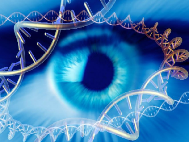 Генетическая диагностика врожденного амавроза Лебера тип 2